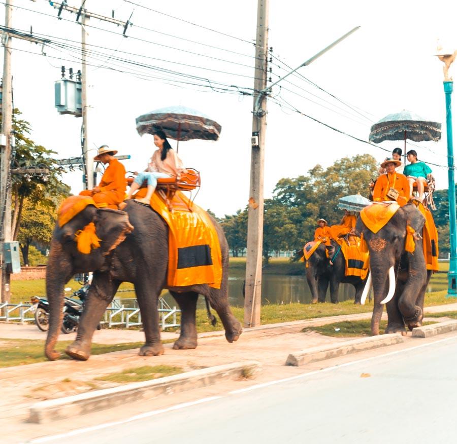 Ayutthaya Thailand Elefants